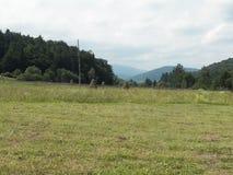 草甸在横过喀尔巴阡山脉 免版税库存照片