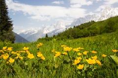 草甸在法国阿尔卑斯 库存照片
