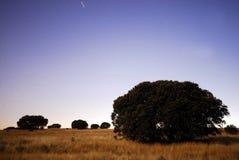 草甸在瓜达利斯德拉谢拉,马德里,西班牙 免版税库存图片