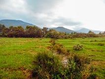 草甸在秋天 库存照片