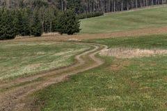 草甸在绿色草甸之间的道路绕和导致森林 库存图片