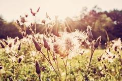草甸在背后照明,秋天自然,红色过滤器开花 免版税库存照片