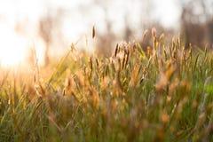 草甸在阳光下 免版税库存图片