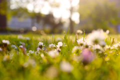 草甸在阳光下 图库摄影