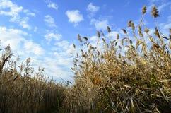 草甸在Vacaresti自然公园,布加勒斯特,罗马尼亚 库存照片