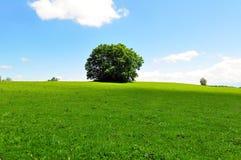 草甸夏天结构树 库存图片