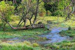 草甸小河 库存图片
