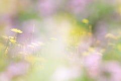 草甸抽象照片有野花的 库存照片