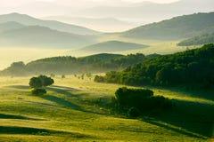 草甸日落的森林 库存图片