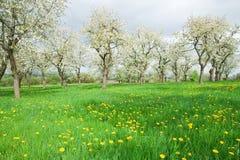 草甸春天 库存照片