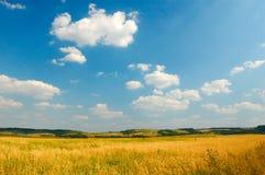 草甸晴朗的视图 免版税库存图片