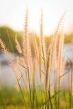 草甸有被弄脏的背景 免版税图库摄影