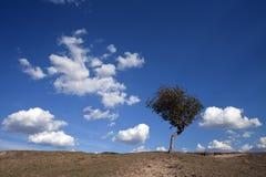 草甸满足天空 图库摄影