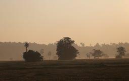 草甸由大树盖 免版税库存图片