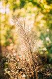 草甸的夏天野生植物有明亮的阳光的 库存照片