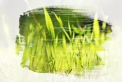 草甸的梦想和抽象图象有绿色年轻草的 与水彩刷子冲程纹理的两次曝光作用 库存图片