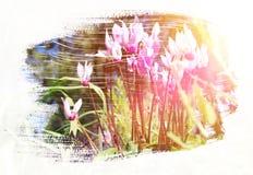 草甸的梦想和抽象图象有绿色年轻草的 免版税库存图片
