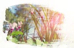 草甸的梦想和抽象图象有绿色年轻草的 库存照片