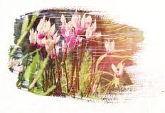 草甸的梦想和抽象图象有绿色年轻草的 图库摄影