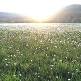 草甸的退色的和被曝光过度的照片充满蒲公英 库存图片