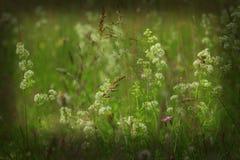 草甸的黑暗的图象在绿草开花 库存照片
