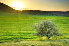 草甸结构树 库存照片