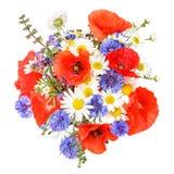 草甸花、虞美人与矢车菊和延命菊 库存照片