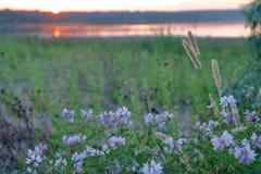 草甸花在一个夏天晚上 库存照片