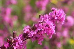 草甸花在夏天 免版税图库摄影