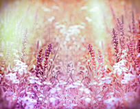 草甸花在春天 免版税图库摄影