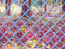 草甸花是在铁丝网篱芭里面 选择聚焦 库存图片