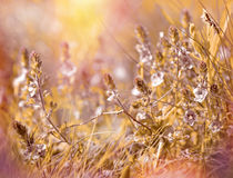 草甸花-草甸在春天 免版税库存图片