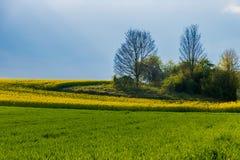 草甸草原绿色和黄色强奸阳光 库存图片