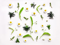 草甸草本和花的五颜六色的明亮的样式在白色背景 平的位置照片 免版税库存照片