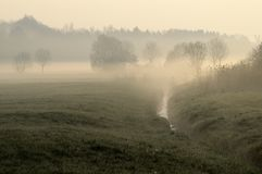 草甸薄雾早晨 图库摄影