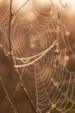 草甸蜘蛛日出万维网 免版税库存图片