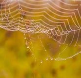 草甸蜘蛛日出万维网 库存照片