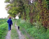 草甸车道的狗步行者 免版税库存图片