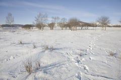 草甸雪 免版税库存图片