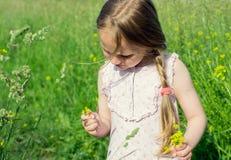草甸领域采摘花的小女孩 免版税库存照片
