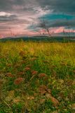 草甸风景在夏天 图库摄影