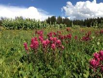 草甸风景桃红色油漆刷 库存照片