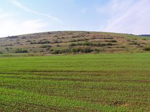 草甸,牧场地,天空。 免版税库存照片