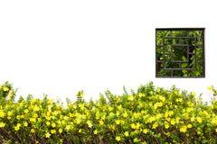 草甸黄色花 库存图片