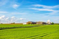 草甸/领域包围的农场 库存照片