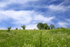 草甸/风景的风景看法 库存照片