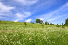草甸/风景的风景看法 免版税库存照片