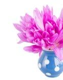 草甸saffronin花瓶诗句  库存照片