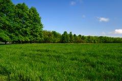 草甸treeline 库存图片