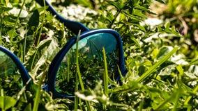 草的反射在太阳镜的 免版税库存照片